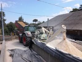 Etape broyage des céréales après récolte